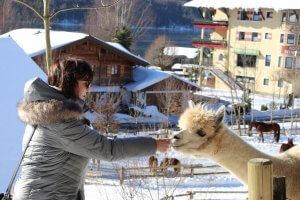 Frau mit Lama