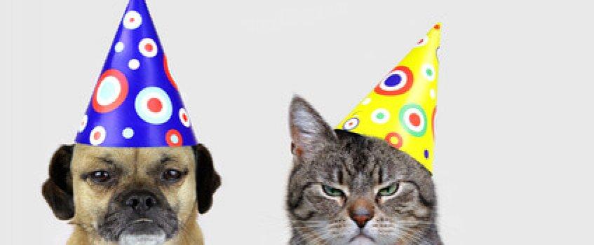 Hund und Katze mit Faschingshut