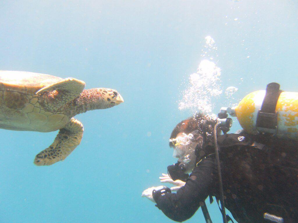 Taucherin und Schildkröte