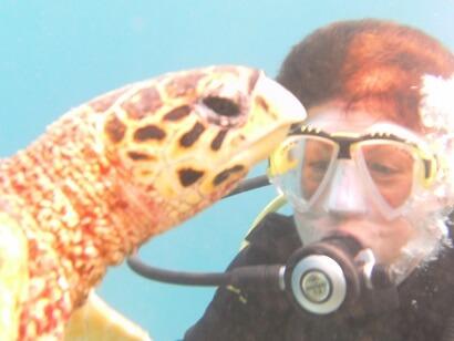 Taucherin mit Schildkröte